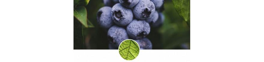 加拿大ATTITUDE 藍莓葉系列